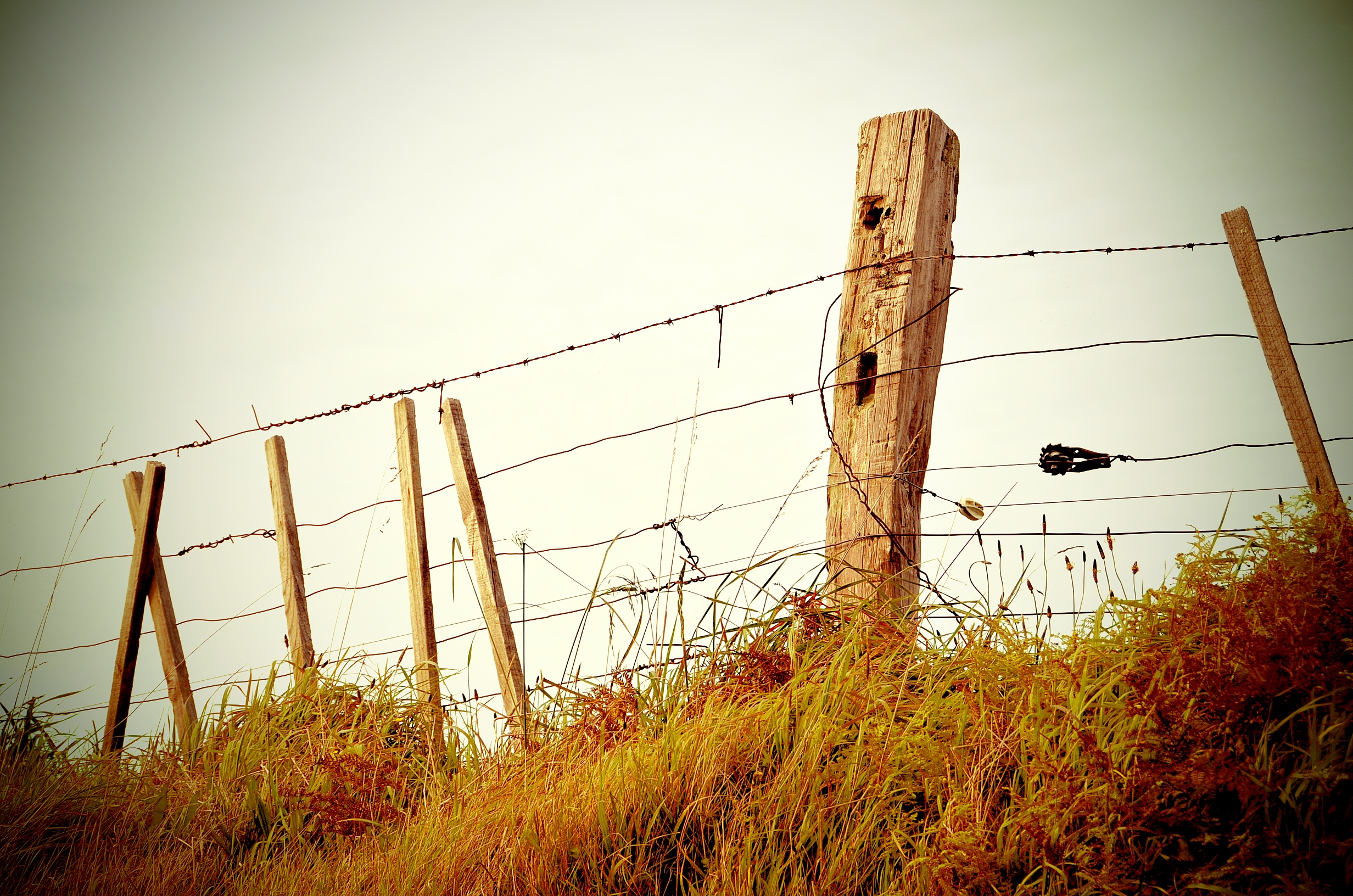 fence-336645_1280