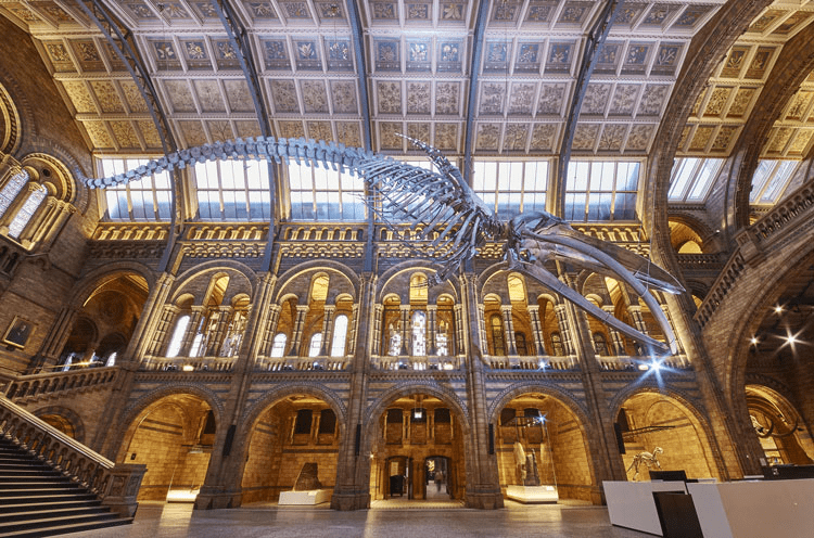 The new design of the National History Museum
